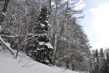 雪が枯れ木に.JPG